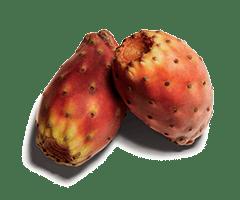 Pricky Pear oil